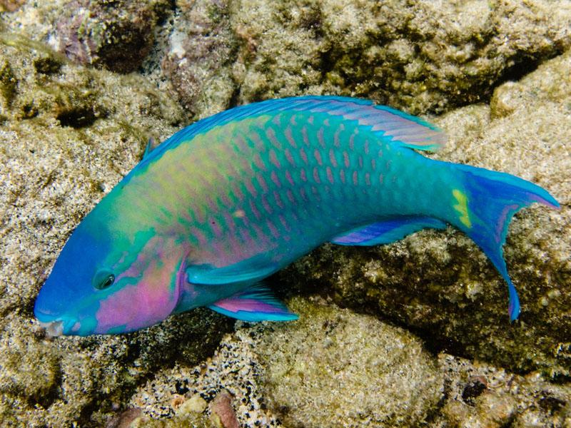 Rudderfish Related Keywords & Suggestions - Rudderfish Long Tail ... Oarfish Eggs