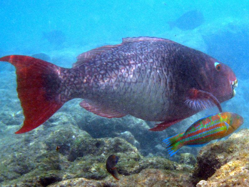 Kahekili Marine Reserve in Maui, Hawaii
